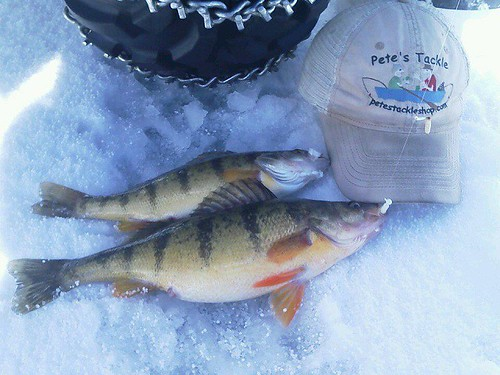 Perch lures for Ice fishing perch lures