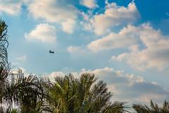 Plane in the Sky.jpg