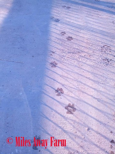 Wet Dog Tracks