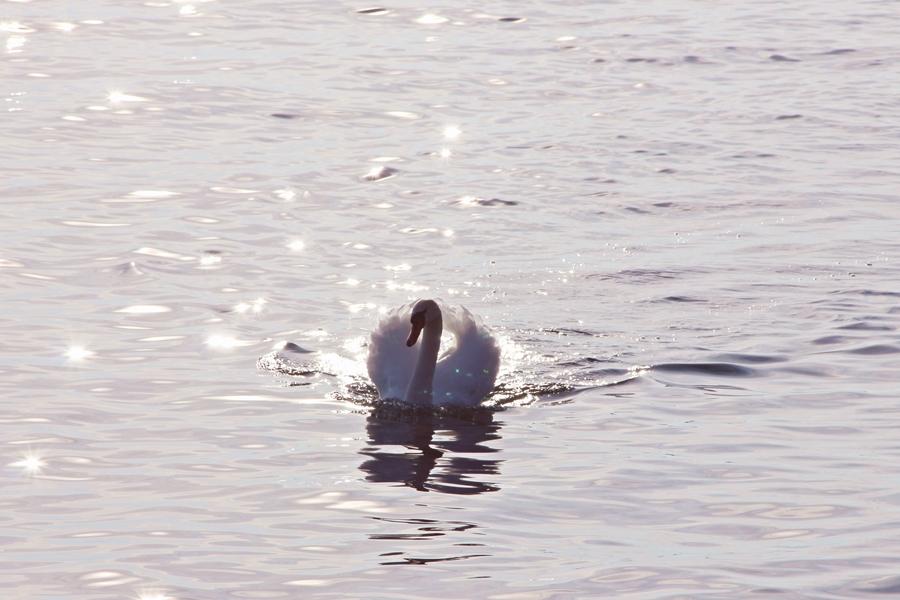 Lac Léman (8)