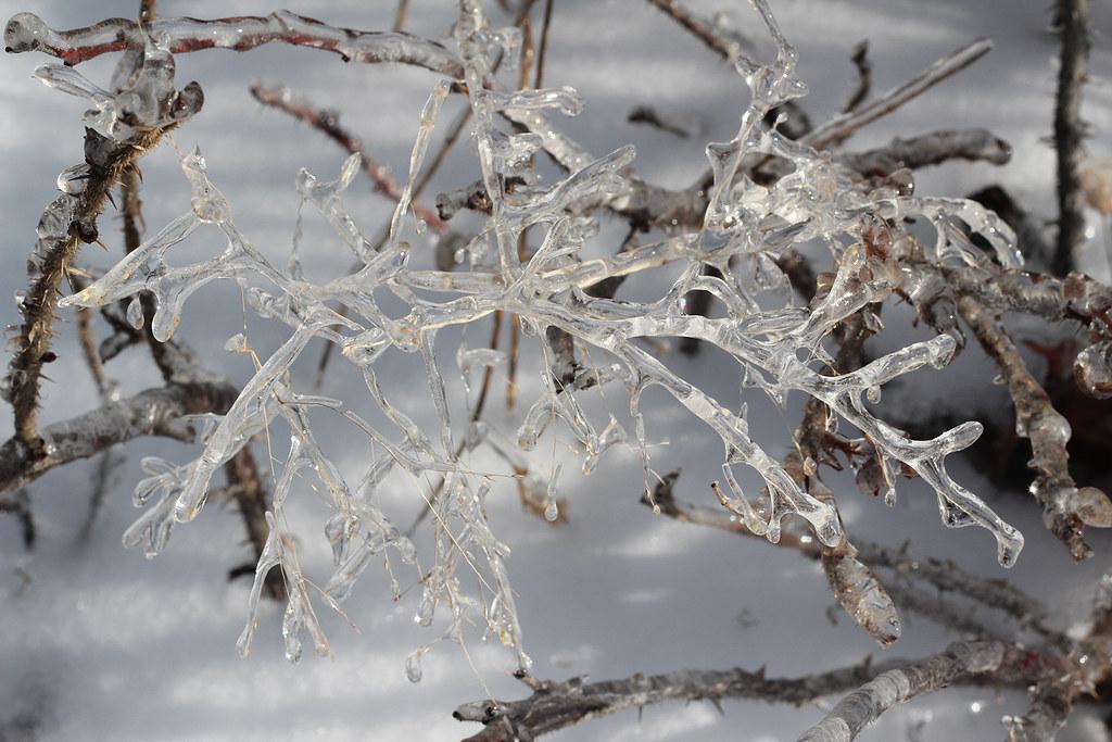 Frozen hay