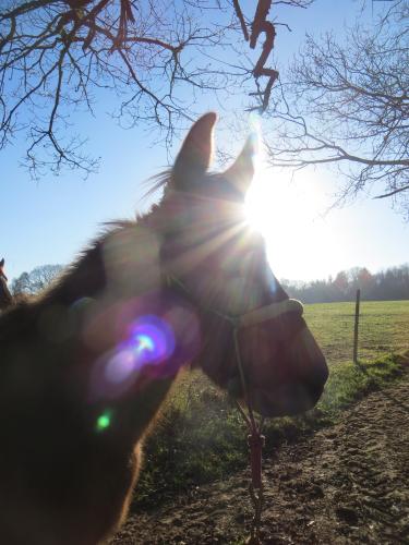 Shiny Winter Mule