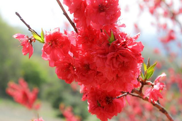 2014-04-19_00363_美の山.jpg