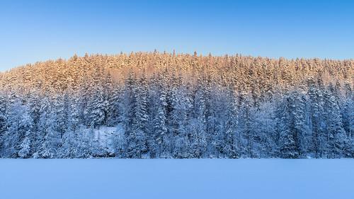 winter sunset forest suomi landscape zoom location fi nikkor dslr 169 hdtv kuopio snowytrees d800 2470mmf28 vuorilampi 70700 pohjoissavo kolmisoppi latvustie