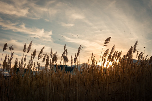 houses sunset sky birds utah tallgrass southjordan highclouds