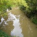 Small photo of Absent Platypus Stream