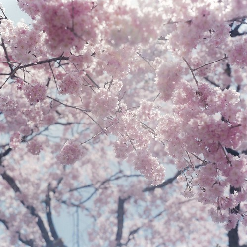 "Rinko-Kawauchi, Untitled (I-130), from the series ""IIlluminance"", 2011"
