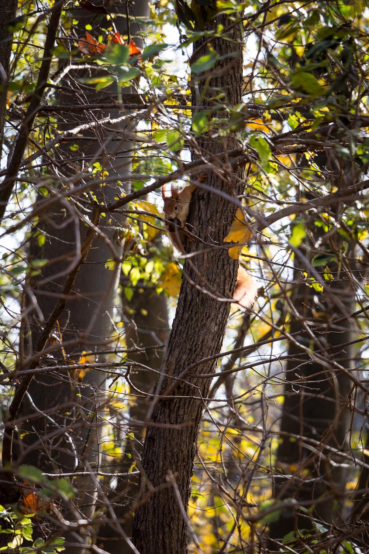 squirrel playing hide and seek | lili weissensteiner