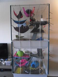Rat Cage