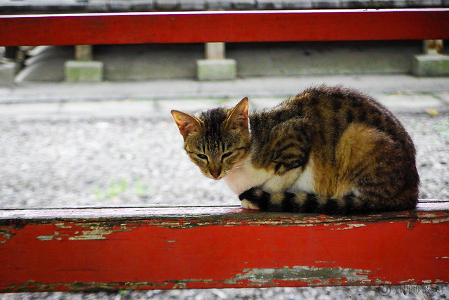 Today's Cat@2016-06-14