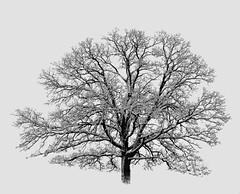 oak bones: james keefe