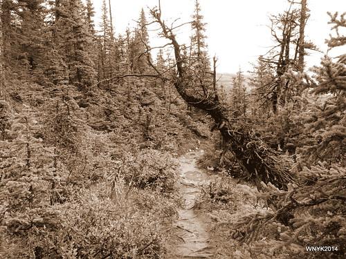 Bow Lake Trail