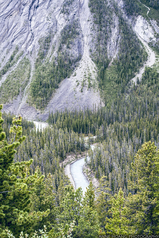 Canadian Rockies, river and trees