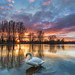 swan in the sunset (buga kassel) by Alexander Lauterbach Photography