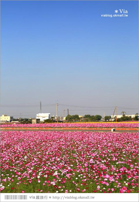 【南新彩繪村】彰化埔鹽/南新立體彩繪村~隱藏版的花海圍繞整村,美景如畫!25
