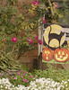 Halloween Flag and Rose Bush