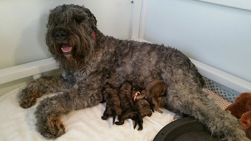 A very proud Brielle with her puppies