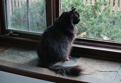 Rocco in window