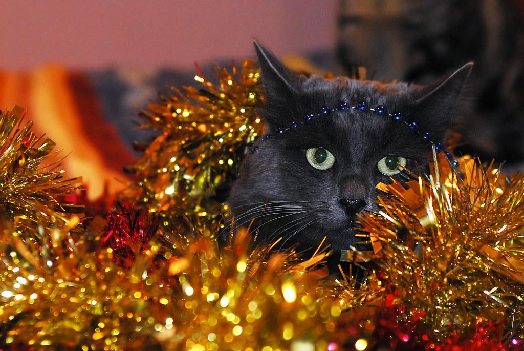 Christmas preparations...
