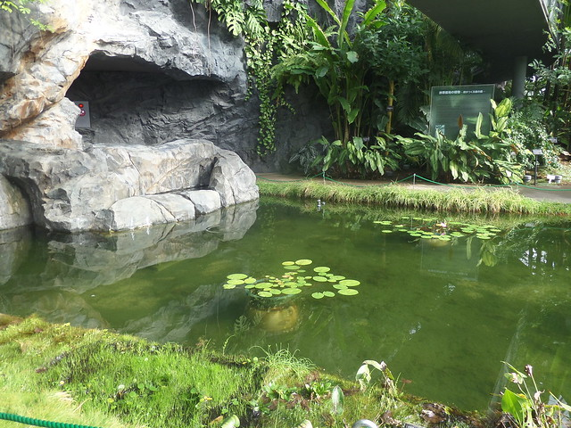 Pond inside the Greenhouse