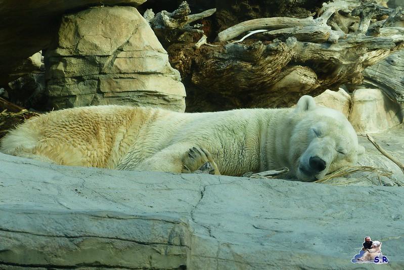 San Diego Zoo 10.11.2014 247