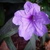 Morning #flower #goodday #bismillah #alhamdulillah #bunga #pagi