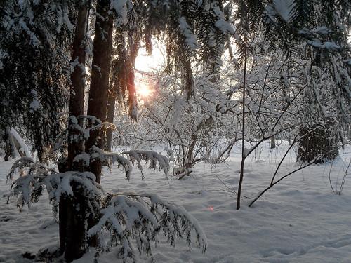 Sträucher im Schnee bei Gegenlicht