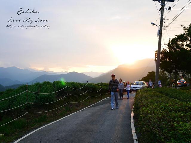 新北石碇景點千島湖八卦茶園 (17)