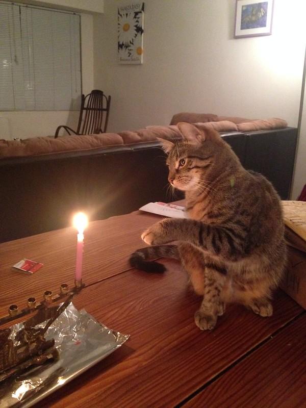 Stella's rival: a Hanukkah candle