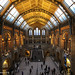 Small photo of National history museum, London