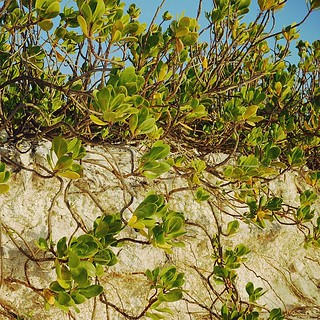Holding back erosion, Honeymoon Island. #beach