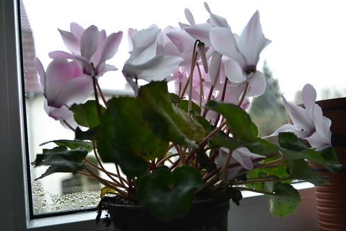 Erste Blüten in Haus und Garten