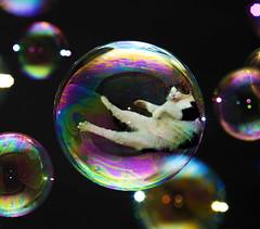 Bubblecat