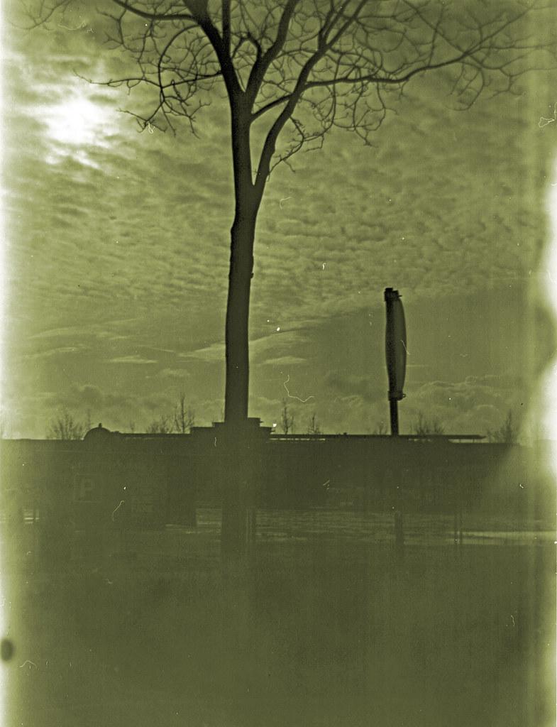 Baum_1200
