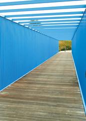 blue bridge experience