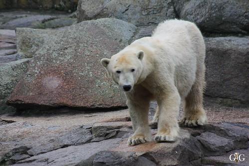 Zoo Berlin 11.01.2015 44
