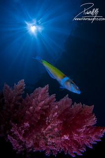 Fish, sun and algae