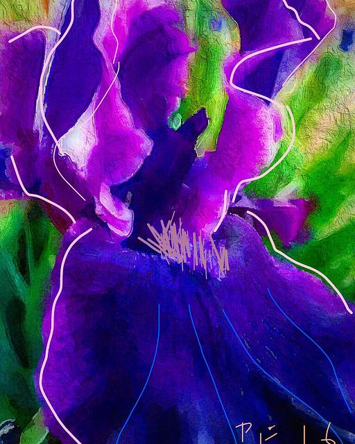"""""""Blue Velvet Iris Petal"""""""