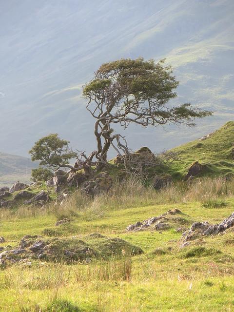 Solitaire et torturé, Torrin, île de Skye, Ross and Cromarty, Highland, Ecosse, Grande-Bretagne, Royaume-Uni.
