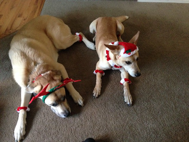 Doggie Elves