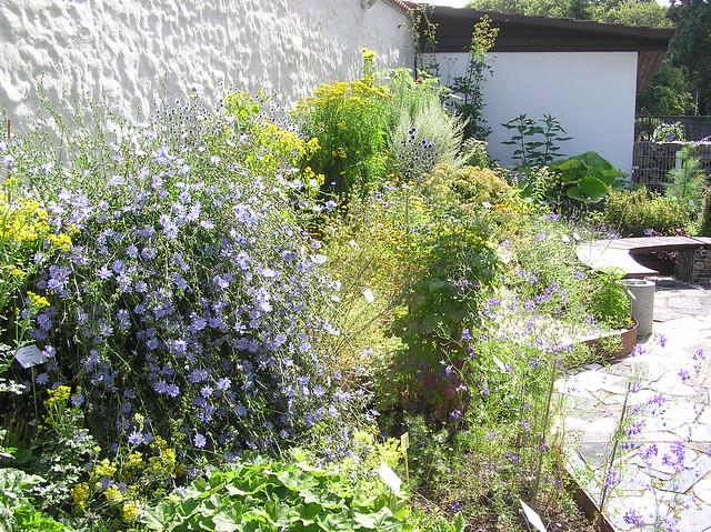 Tartu BG Herb Garden