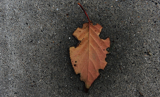 Fall leaf, wet on concrete (2014)