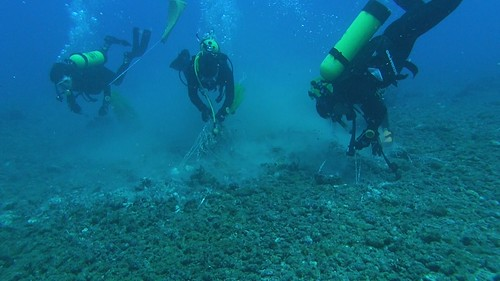 海洋志工隊協助維護海洋生態。