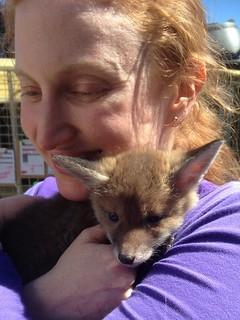 Hugging a little fox