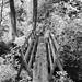 Rough Bridge by Darryl Robertson
