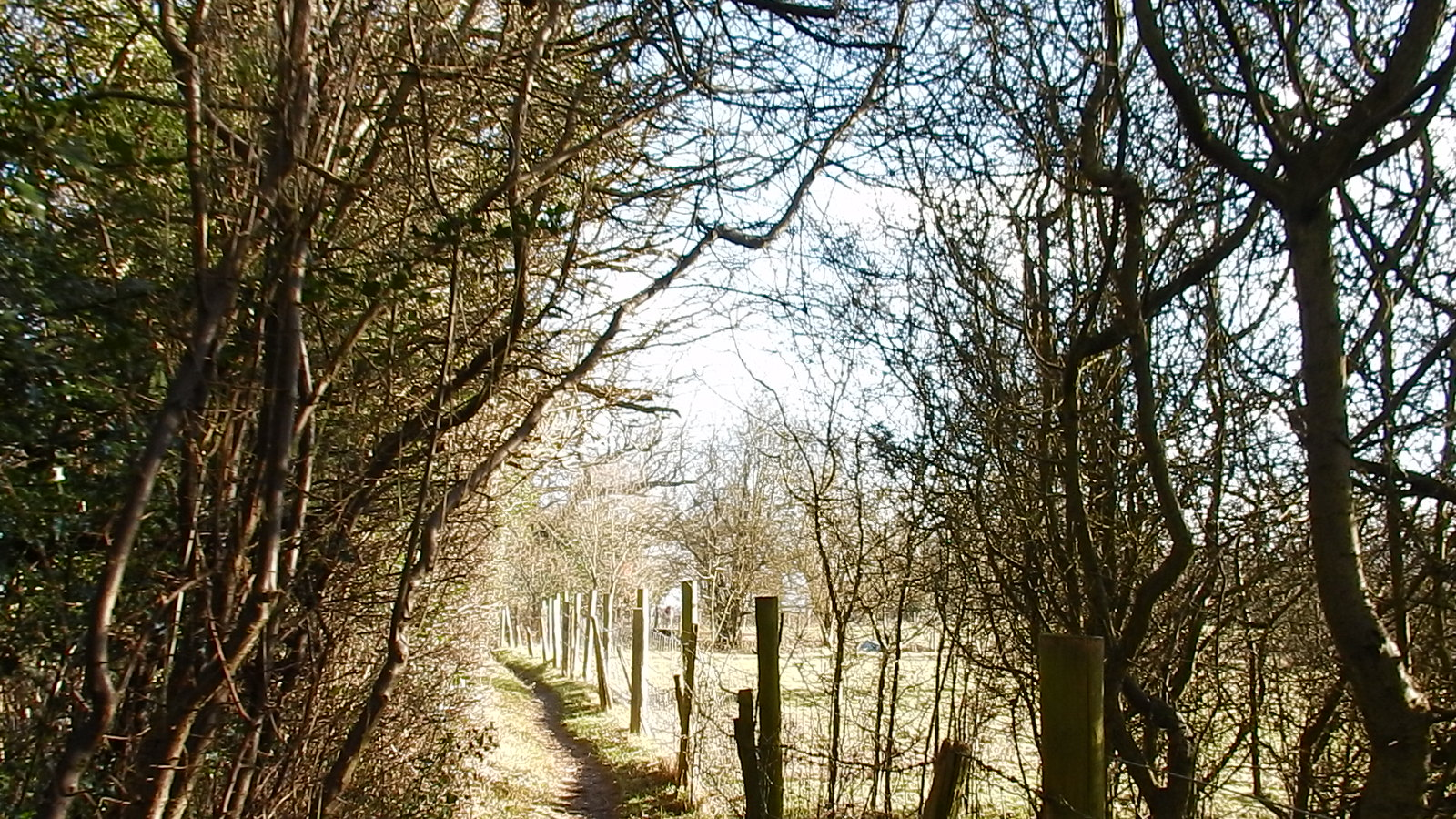 Sunlit Path Hayes to Knockholt