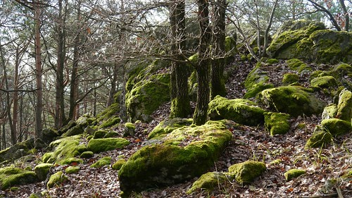 Heimat der Elfen  /  Habitat of the fairies
