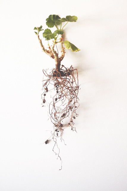 root_01