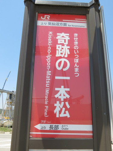 Kiseki-no-ippon-matsu, Rikuzentakata