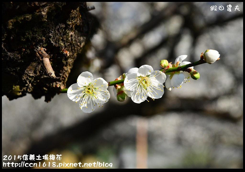 2015信義土場梅花DSC_9384